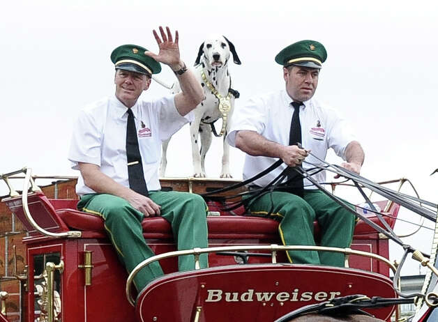 The Anheuser Busch famous horses, the Clydesdales, kick off the courir parade down Lakeshore Drive on Thursday, February 7,2013, in Port Arthur. Photo taken: Randy Edwards/The Enterprise Photo: Randy Edwards