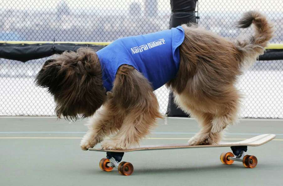 Norman the Scooter Dog rides his skateboard on a rooftop basketball court overlooking the Hudson Riv