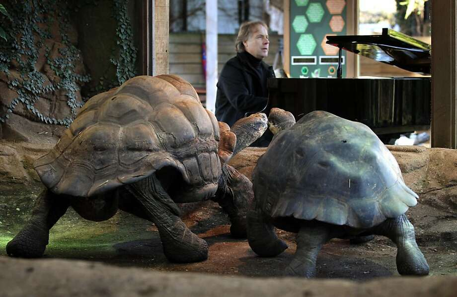 'Imagine me and you, I do, I think about you day and night …' French pianist Richard Clayderman plays the piano to Galapagos tortoises Dirk, 70, and Polly, in an attempt to put the reptiles in the mood to mate at the London Zoo. It didn't work. Photo: Lewis Whyld, Associated Press