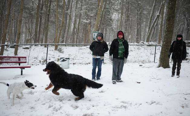 Nanette and Nick Sullivan, of Derby, and Terry Ritchie, of Newtown, watch their dogs play together at the dog park in Shelton, Conn. Friday, Feb. 8, 2013 as snow falls over the area. Photo: Autumn Driscoll