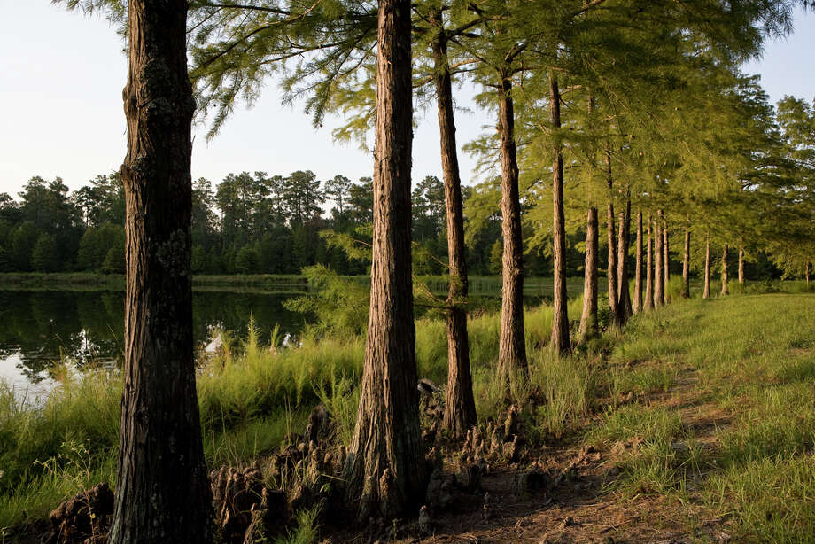 A stand of cypress trees stretches along the shore of Deer Lake on the 2,175-acre Camp Strake, which is north of Houston between The Woodlands and Conroe.