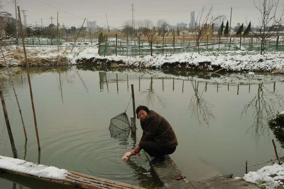 A woman washes a duck which she is preparing for Lunar New Year dinner in Zisiqiao village in China's eastern Zhejiang Province on February 8, 2013.  Preparations continue in China for the Lunar New Year which will celebrate the Year of the Snake on February 10. Photo: PETER PARKS, AFP/Getty Images / AFP