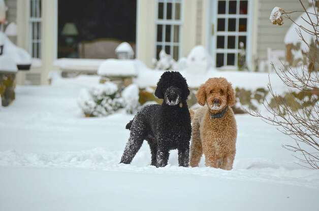 New Canaan was slammed with about 22 inches of snow during the blizzard Friday and Saturday. Photo by Jeanna Petersen Shepard, Feb. 9, 2013 Photo: Contributed Photo