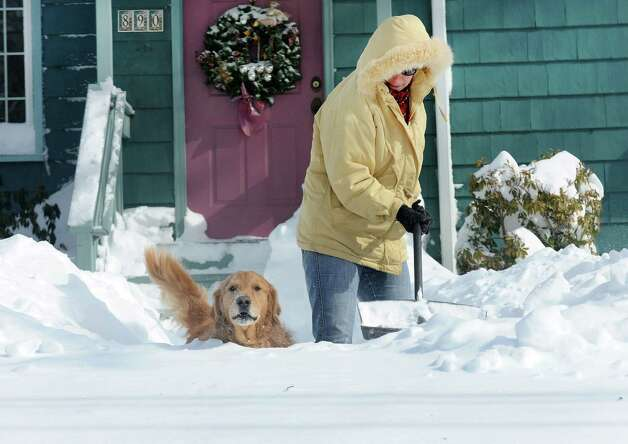 Jayne Buturla digs out of the piled up snow with her trusty companion Luke by her side on High St. in Fairfield, Conn. on Saturday, Feb. 9, 2013. Southwestern Connecticut was hit by one of the biggest snowstorms in history, a howling blizzard that dumped up to three feet of snow across the state. Photo: Cathy Zuraw / Connecticut Post