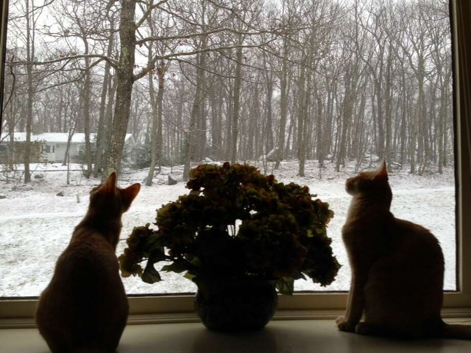 6 month old kittens are mesmerized by their first blizzard