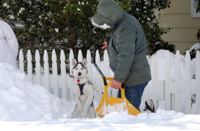 Resident Steve Grippen shovels show as his huskies Yukon and Sasha, right, enjoy the snow after a bl