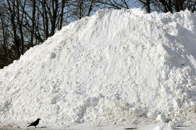 A crow seemingly explores a large pile of plowed snow in the lot of Troy Plaza on Saturday Feb. 9, 2013 in Troy, N.Y. .(Michael P. Farrell/Times Union) Photo: Michael P. Farrell