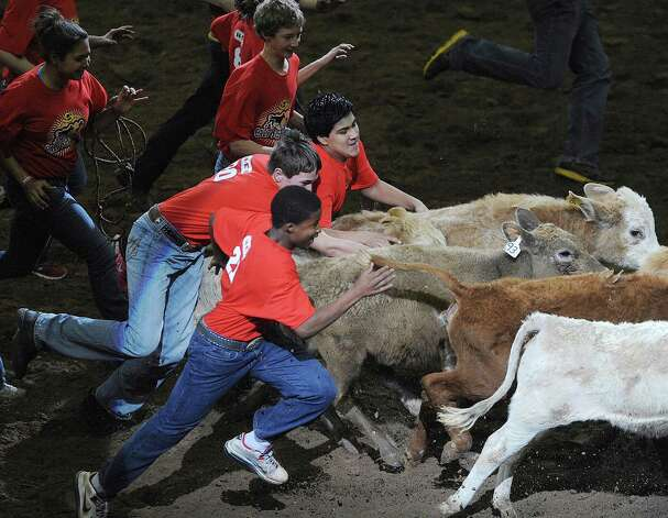 Youngsters chase calves during the third day of Stock Show & Rodeo on Saturday, Feb. 9, 2013. Photo: Billy Calzada, San Antonio Express-News / San Antonio Express-News