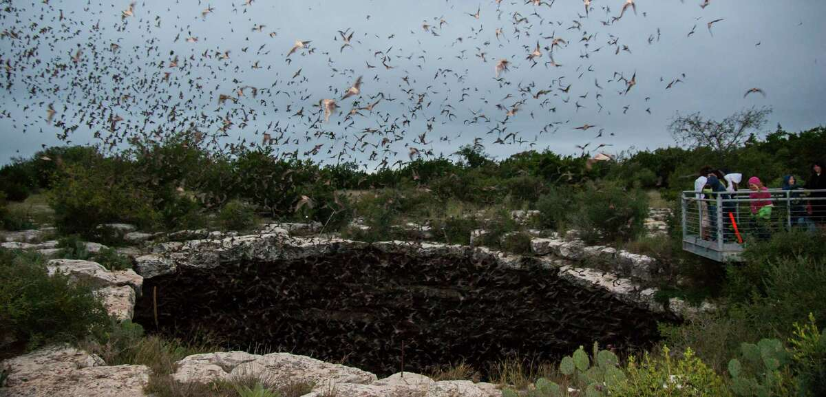 Visitors to Devil's Sinkhole State Park watch as millions of Mexican free-tailed bats pour out.