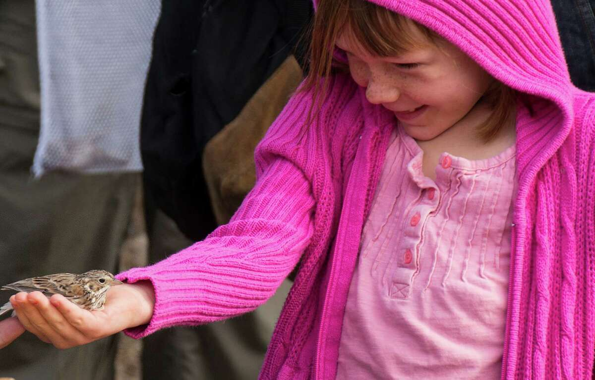 Faith Franklin of Cibolo, 7, holds a vesper sparrow during a birding program at Guadalupe River State Park.