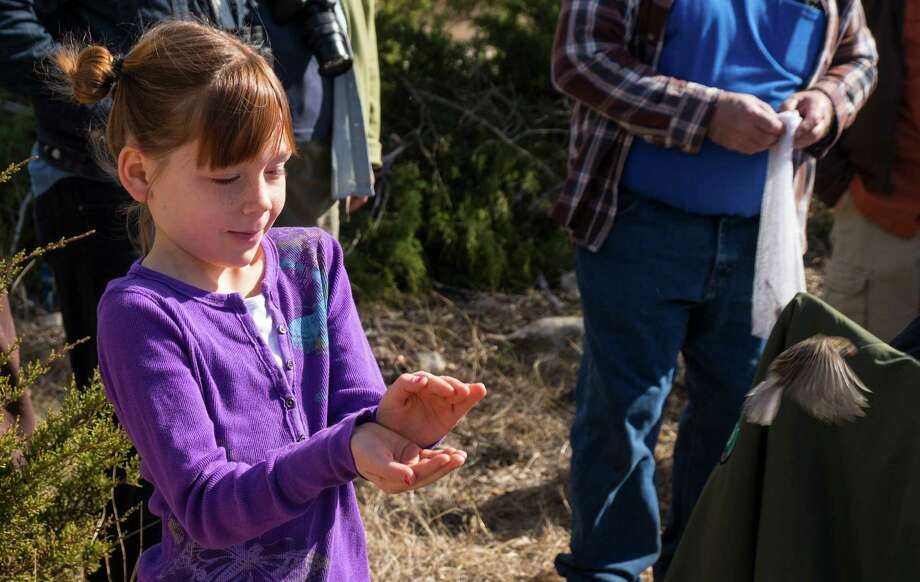 Grace Franklin, 7, of Cibolo, releases a vesper sparrow back into the wild during a birding program at Guadalupe River State Park.  Photo: Josh Trudell / © Copyright 2013 Josh Trudell Photography. All Rights Reserved.