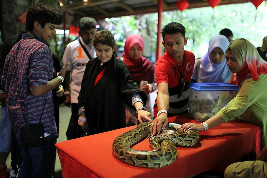 Visitors touch a python during a snake display to celebrate the Chinese New Year at the National Zoo