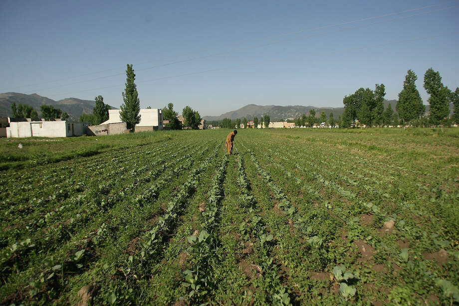 A Pakistani farmer works in his field near the site of the demolished compound of slain Al-Qaeda leader Osama bin Laden in northern Abbottabad on May 2, 2012. Pakistan was in a state of high alert over fears terrorists could mark the first anniversary of bin Laden's killing by American Navy SEALs with revenge attacks. The al-Qaeda founder Osama bin Laden and 9/11 mastermind was killed on May 2, 2011 in a secret US Navy SEAL operation in a walled-off compound in the Pakistani garrison town of Abbottabad, north of the Pakistani capital. Photo: SAJJAD QAYYUM, AFP/Getty Images / 2012 AFP