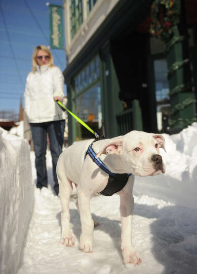 Cory Sykes of Milford takes her puppy Oscar for his first tentative walk in the snow on River Street