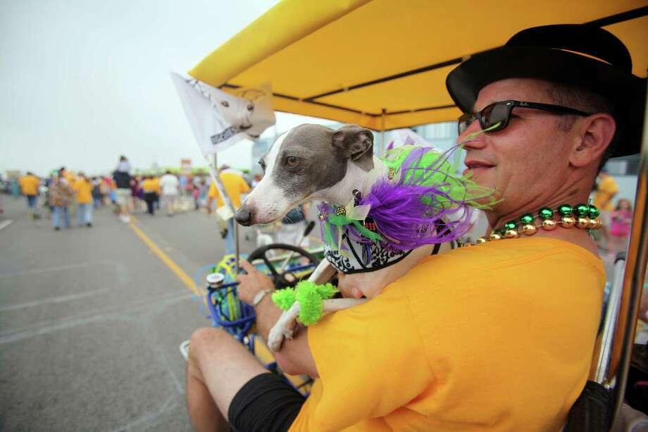 An Italian Greyhound inspects the dog talent. Photo: Mayra Beltran, Houston Chronicle / © 2013 Houston Chronicle