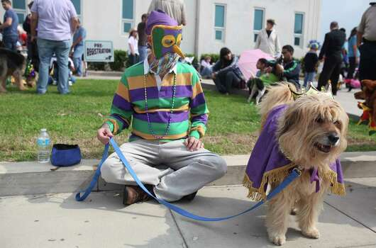 Roger Wood holds on to 'Teddy' who won the Mr. Congeniality award during the costume contest before the Krewe of Barkus & Meoux Parade along the Seawall on Sunday, Feb. 10, 2013, in Galveston. Photo: Mayra Beltran, Houston Chronicle / © 2013 Houston Chronicle