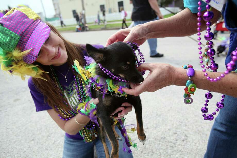 "Crystal Sweeney smiles as her dog ""Foxy"" gets beaded. Photo: Mayra Beltran, Houston Chronicle / © 2013 Houston Chronicle"