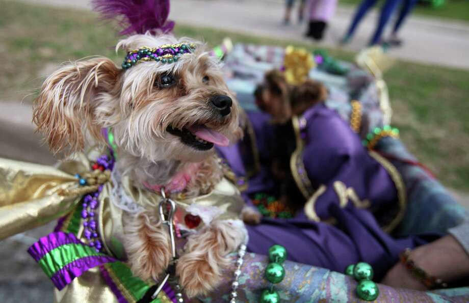 Queen Abbey and King Toto participate. Photo: Mayra Beltran, Houston Chronicle / © 2013 Houston Chronicle