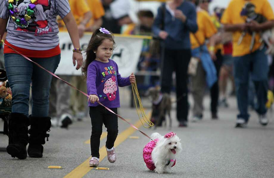Emma Leyva, 3, and her dog Sophie navigate the route at a brisk pace. Photo: Mayra Beltran, Houston Chronicle / © 2013 Houston Chronicle