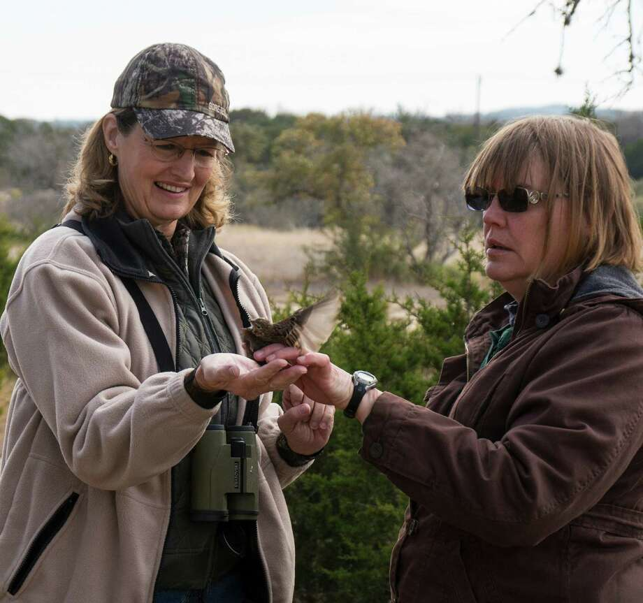Peggy York of San Antonio, left, and park volunteer Linda Gindler release a vesper sparrow after it was banded during a birding program at Guadalupe River State Park.  Photo: Josh Trudell / © Copyright 2013 Josh Trudell Photography. All Rights Reserved.