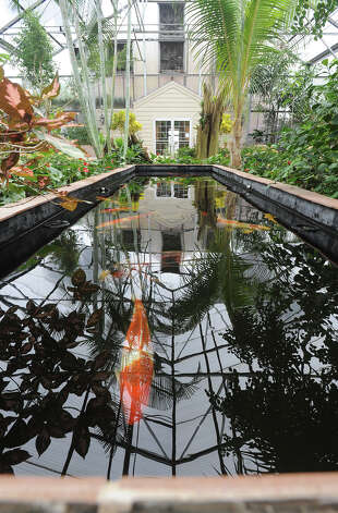 Koi fish swim through a small pond at the Horticultural Center at Tyrrell Park in Beaumont Photo taken Thursday, February 07, 2013 Guiseppe Barranco/The Enterprise Photo: Guiseppe Barranco, STAFF PHOTOGRAPHER / The Beaumont Enterprise