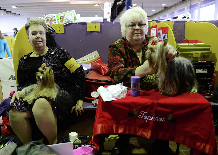 Nancy Lonan, left, with Yorkshire Terrier Steamer watches Nancy Smith, right,  groom Suri before judging at the Westminster Kennel Club Dog Show February 11, 2013 in New York. Photo: STAN HONDA, AFP/Getty Images / 2013 AFP