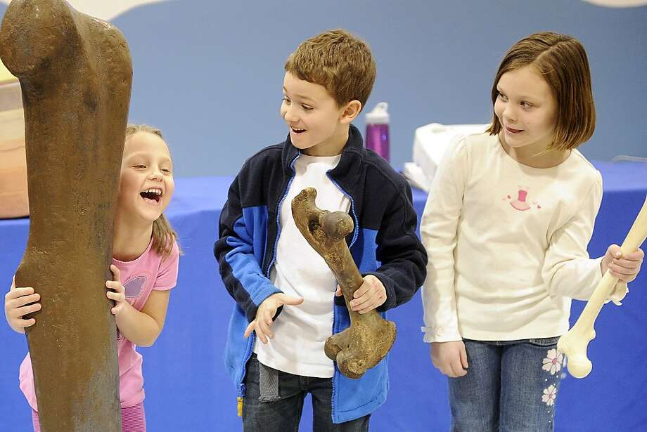 The thigh bone appears to be connected to the funny bone:At the Science Museum of Minnesota in Winona, kindergartener Emma Hatter giggles uncontrollably while comparing a model of a long-neck dinosaur femur to its moose and human counterparts, held respectively by second-graders Brody Whetsone and Brie Menting. Photo: Andrew Link, Associated Press