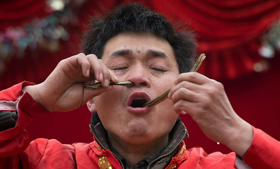 Impressive. But let's see him do it with a boa constrictor: A Lunar Year of the Snake performer threads a serpent through his nose and mouth during a show at the Temple of Earth park in Beijing. Photo: Ed Jones, AFP/Getty Images