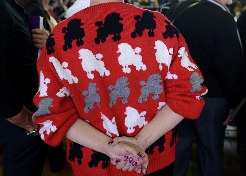 A woman wears a Poodle sweater as she watches judging at the Westminster Kennel Club Dog Show Februa