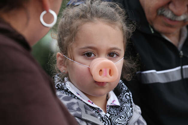 Ava Torres, 4, wears a pig nose before the start of the Swifty Swine Sprints at the San Antonio Stock Show and Rodeo, Monday, Feb. 11, 2013. The race featured pigs named after celebrities such as Kevin Bacon, Jennifer Low Pig and Brad Pig. Photo: Jerry Lara, San Antonio Express-News / © 2013 San Antonio Express-News
