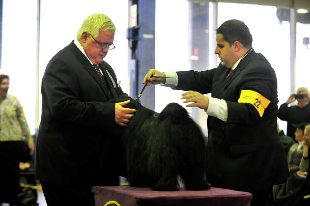 David Kirkland, left, judges Michael McLoughlin's dog Rosie, a Tibetan terrier, during the 137th Westminster Kennel Club Dog Show at Pier 92/94 in New York City on Monday, Feb. 11, 2013. For related coverage go to www.westminsterkennelclub.org. Photo: Jason Rearick / The News-Times