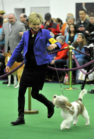 Lynne Florian, of Darien, shows her dog, Annie, who is competing her dog in the petits bassets breed category, during the 137th Westminster Kennel Club Dog Show at Pier 92/94 in New York City on Monday, Feb. 11, 2013. For related coverage go to www.westminsterkennelclub.org. Photo: Jason Rearick / The News-Times