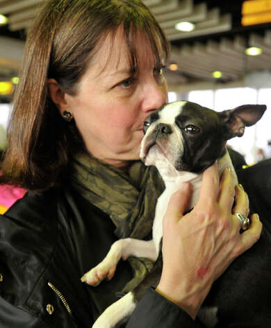 Lucy Hicks, of Greenwich, kisses Clementine, her Boston terrier, while showing her to spectators in the benching arrea during the 137th Westminster Kennel Club Dog Show at Pier 92/94 in New York City on Monday, Feb. 11, 2013. For related coverage go to www.westminsterkennelclub.org. Photo: Jason Rearick / The News-Times