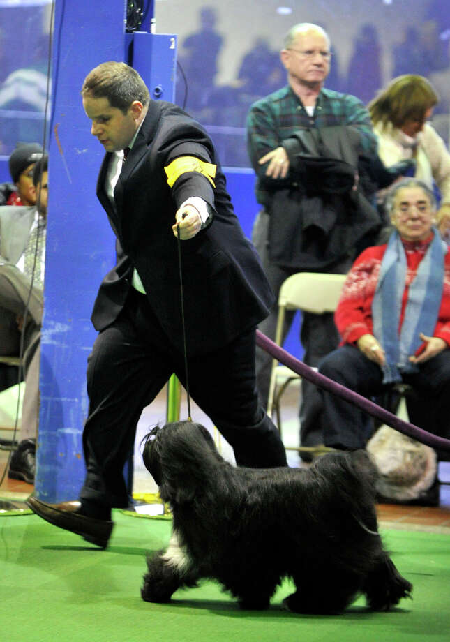 Michael McLoughlin, from Stamford, shows his dog Rosie, a Tibetan terrier, during the 137th Westminster Kennel Club Dog Show at Pier 92/94 in New York City on Monday, Feb. 11, 2013. For related coverage go to www.westminsterkennelclub.org. Photo: Jason Rearick / The News-Times