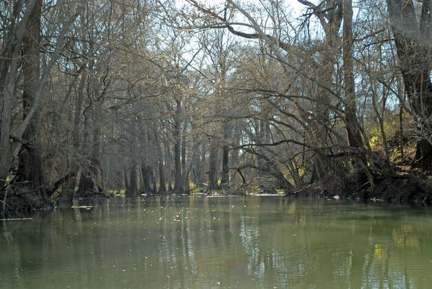 One of the few sections of the Medina River without a log jam
