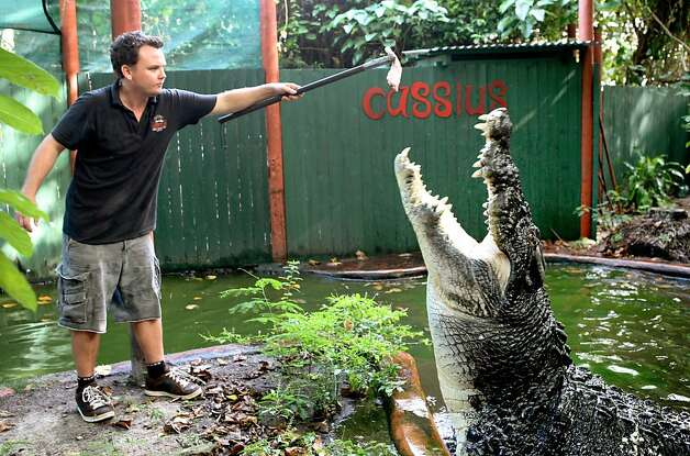 Lolong, ?-2013: The largest crocodile in captivity at 20 foot 3 inches, the Indio-Pacific crocodile was suspected of eating a farmer, a 12-year-old girl and several water buffaloes in the Philippines before being captured and put on display. Lolong was found dead on February 10, 2013. Photo: Marineland Melanesia, AFP/Getty Images