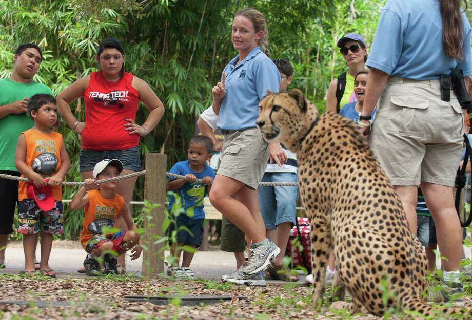 Carnivore keeper Angie Pyle teaches youngsters about Cheetahs at the Houston Zoo on Tuesday, July 31, 2012, in Houston. ( J. Patric Schneider / For the Chronicle ) Photo: J. Patric Schneider, For The Houston Chronicle / © 2012 Houston Chronicle