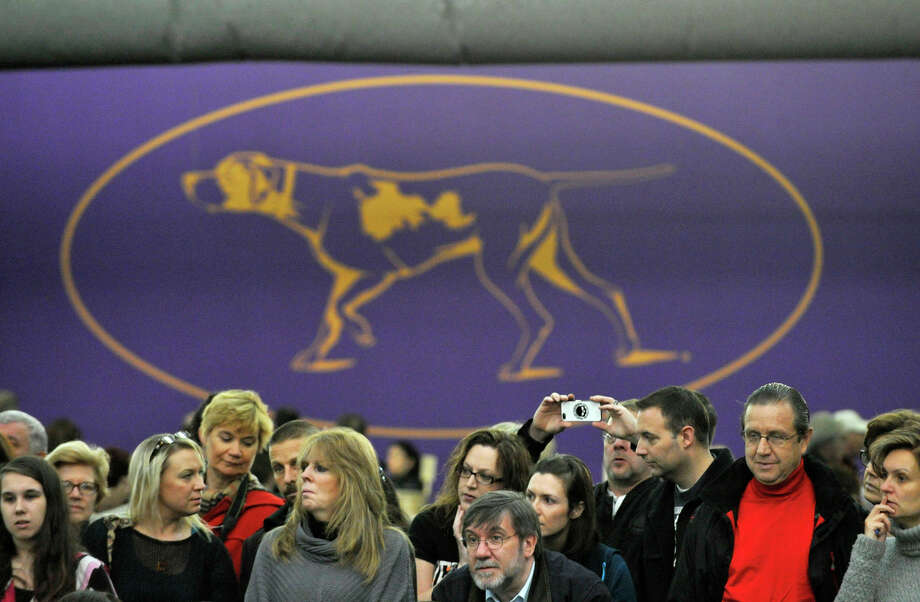Spectators watch the 137th Westminster Kennel Club Dog Show at Pier 92/94 in New York City on Tuesday, Feb. 12, 2013. For related coverage go to www.westminsterkennelclub.org. Photo: Jason Rearick / The News-Times
