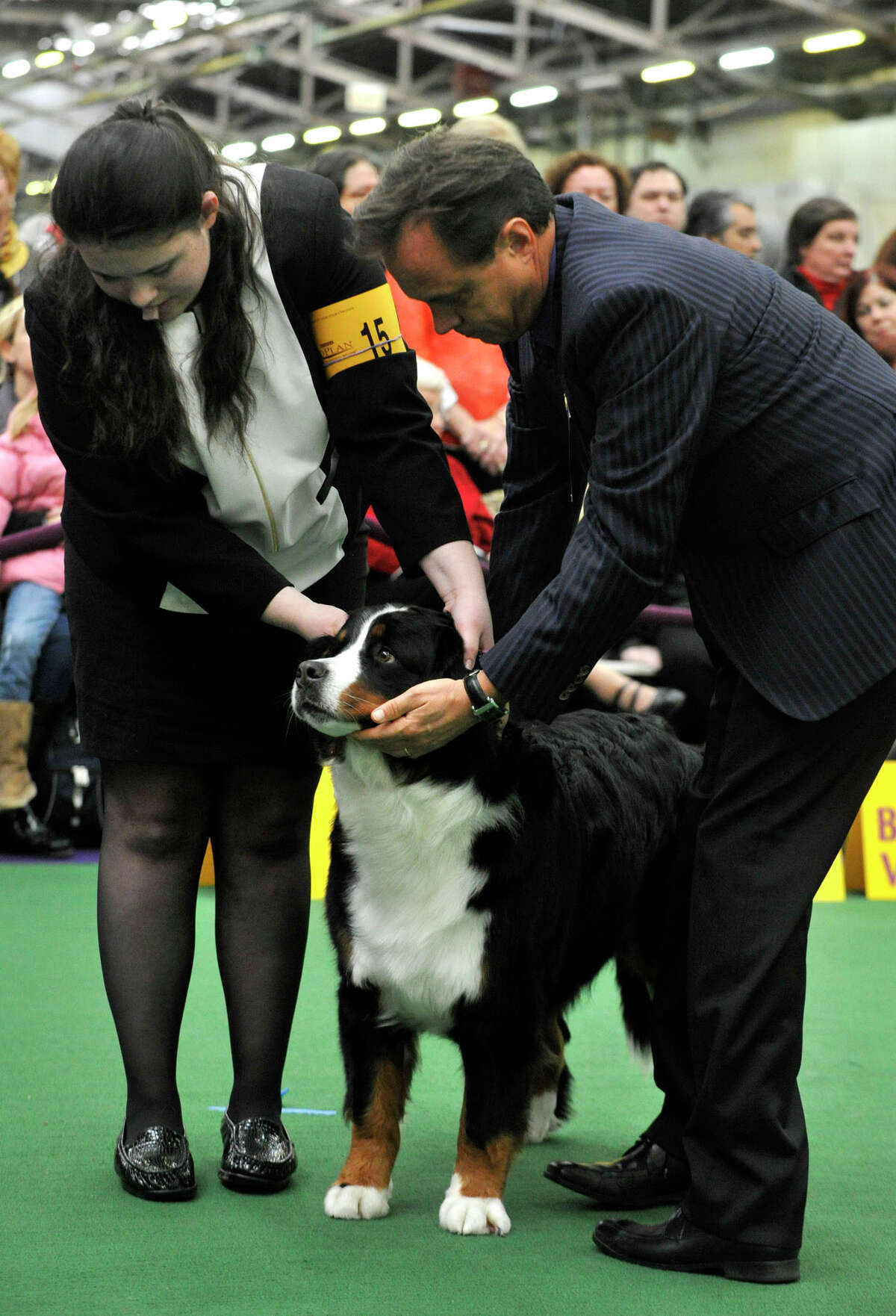 Rachel Meyers, of Southbury, shows her dog, Juliette, a Bernese mountain dog, to judge Espen Engh during the 137th Westminster Kennel Club Dog Show at Pier 92/94 in New York City on Tuesday, Feb. 12, 2013. For related coverage go to www.westminsterkennelclub.org.