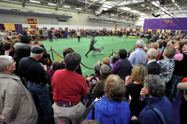 Spectators watch the standard schnauzers compete during the 137th Westminster Kennel Club Dog Show at Pier 92/94 in New York City on Tuesday, Feb. 12, 2013. For related coverage go to www.westminsterkennelclub.org. Photo: Jason Rearick / The News-Times
