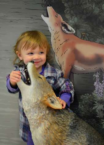Zoey Coulombe, 18 months, plays with a stuffed animal Feb. 12, 2013, at the Pine Bush Discovery Center in Albany, N.Y.  The Nasadowski's were part of a Pre-K program at the Discovery Center that teaches how our native animals survive the long, cold winters in this region.    (Skip Dickstein/Times Union) Photo: SKIP DICKSTEIN / 00021129A