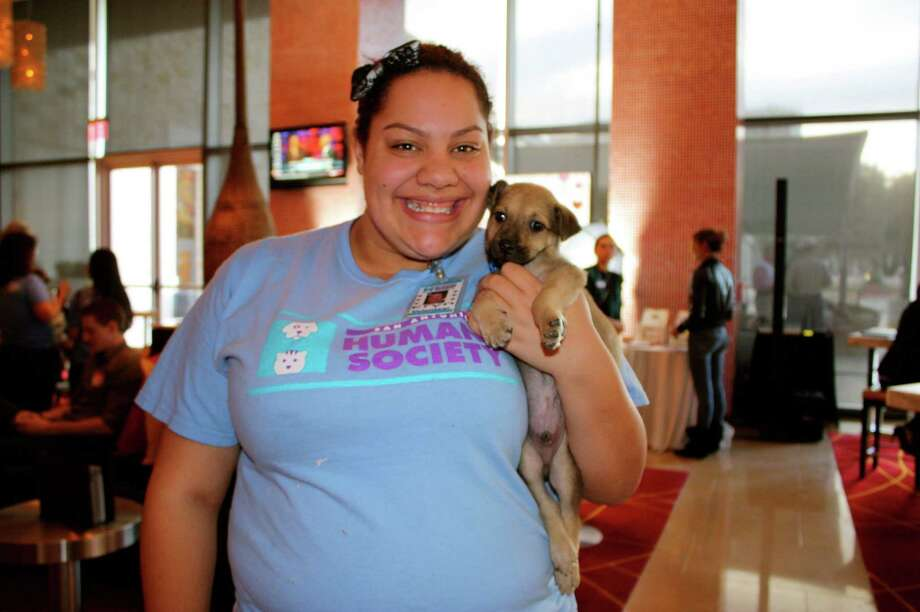 The San Antonio Humane Society hosts an adoption event at the Grand Hyatt San Antonio downtown on Tuesday, Feb. 12, 2013. Photo: Yvonne Zamora, MySA.com