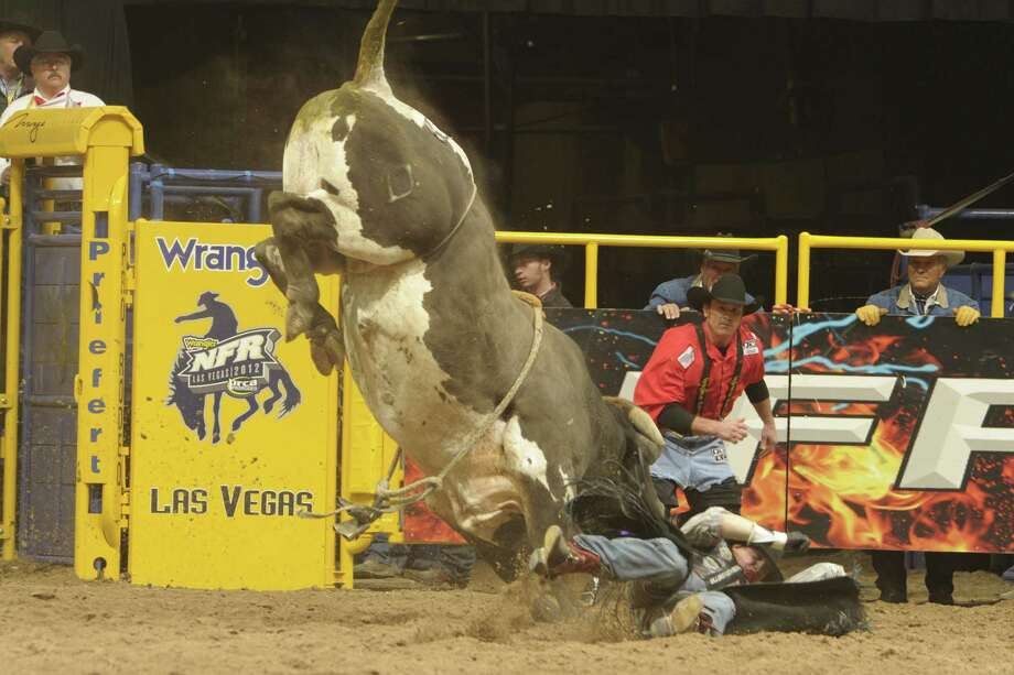 Cat Ballou, dispatching a rider quickly out of the chute in Las Vegas, will have fans looking for him at the rodeo next week. Photo: Courtesy Photo / Professional Rodeo Cowboys Association