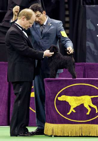 Banana Joe, an affenpinscher who won Best in Show, is judged by Michael Dougherty, left, as Ernesto Lara handles him during the 137th Westminster Kennel Club dog show, Tuesday, Feb. 12, 2013, at Madison Square Garden in New York. Photo: Frank Franklin II