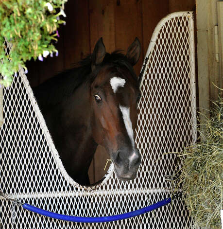 Rachel Alexandra enjoys the quiet of her stall this afternoon August 30, 2010, at the Oklahoma Training Center in Saratoga Springs after a tough losing race yesterday.   (Skip Dickstein/Times Union) Photo: Skip Dickstein