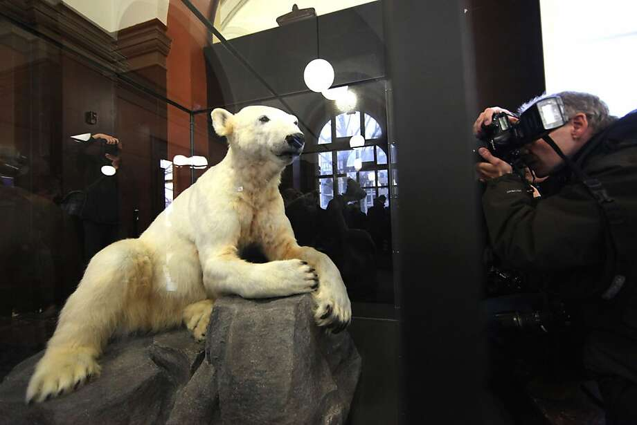 "They stuffed Knut?! A ""model"" of the world-famous Berlin polar bear featuring his original fur has been placed in a glass case in the city's Natural History Museum. Knut, the cub abandoned by his mother but adored by millions of fans, died two years ago. Photo: Adam Berry, Getty Images"