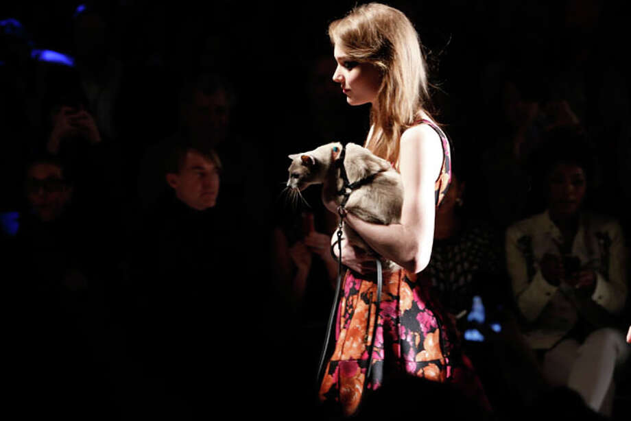 A model walks the runway holding a cat at the Tracy Reese Fall 2013 fashion show during Mercedes-Benz Fashion Week at The Studio at Lincoln Center on February 10, 2013 in New York City.  (Photo by Cindy Ord/Getty Images for Mercedes-Benz Fashion Week) Photo: Cindy Ord, Express-News / 2013 Getty Images