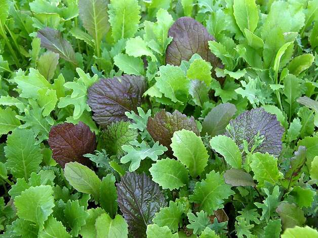 Heirloom greens mix includes Russian kale, mild mustards, mizspoona and mizuna Photo: Renee's Garden