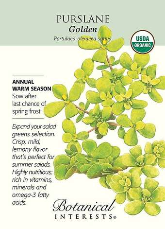 'Golden' purslane Photo: Botanical Interests
