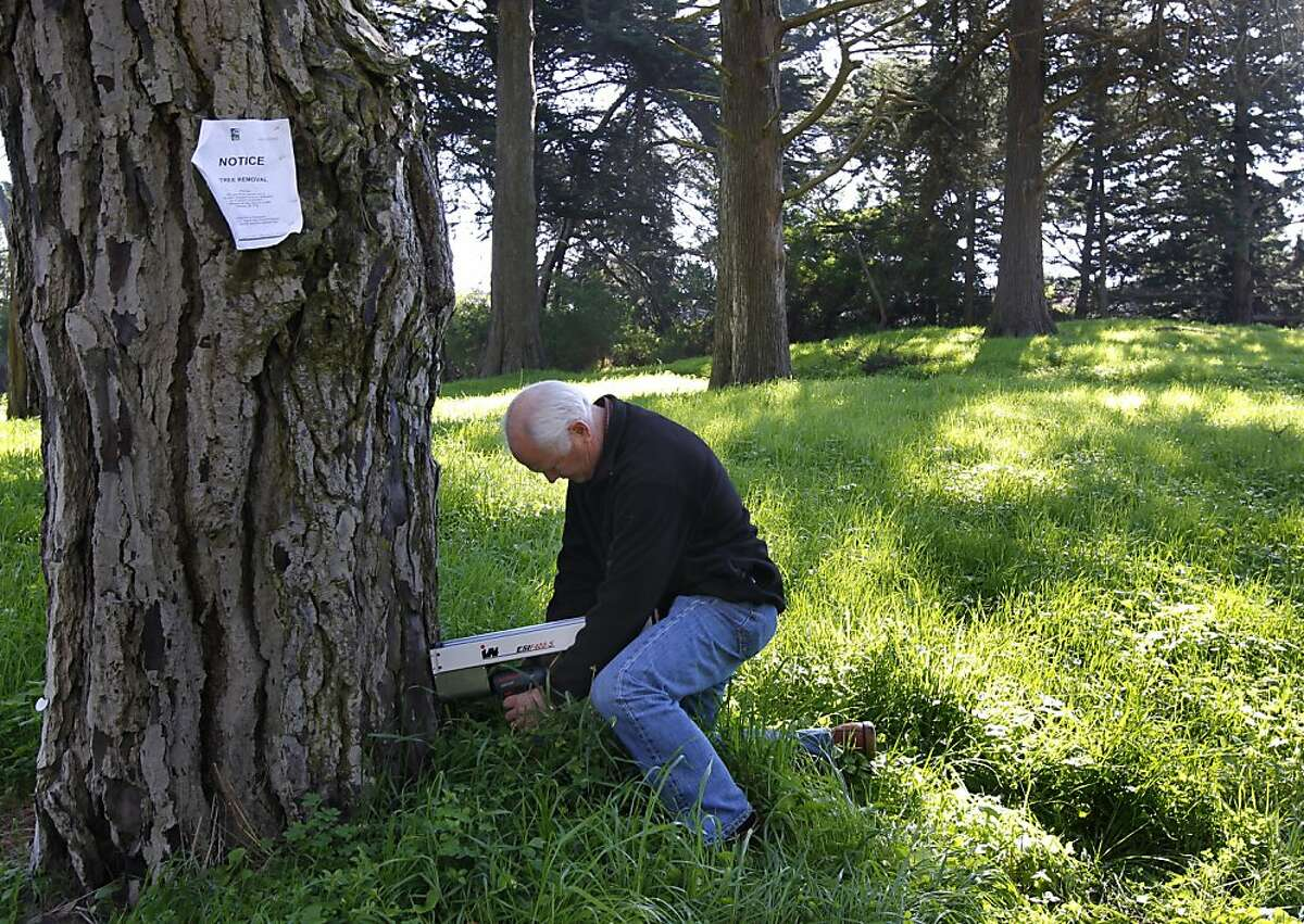 Arborist Larry Costello uses a resistance micro drill to check the condition of an aging Monterey pine that is marked for removal at Golden Gate Park in San Francisco, Calif. on Thursday, Feb. 14, 2013.